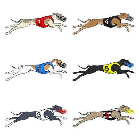 Vector set of running dog saluki breed, in dog racing or coursing dress