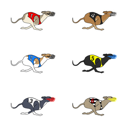 borzoi: Set of vector images of running dog whippet breed in dog racing or coursing dress
