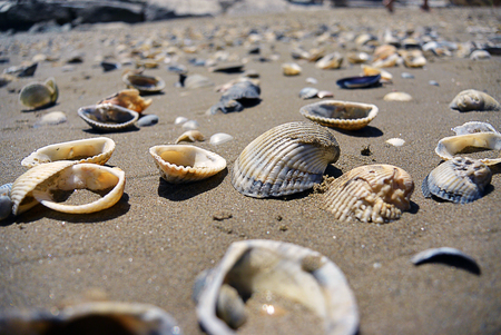 Close up view on seashells on the beach in the sand in sunny day, selective focus