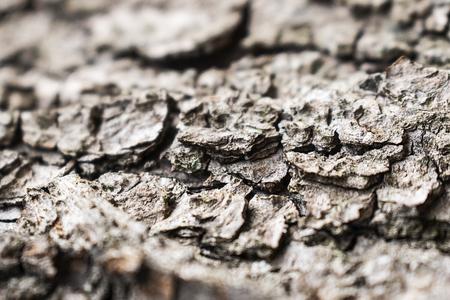 Macro photo of wrinkle tree bark texture. Nature background.
