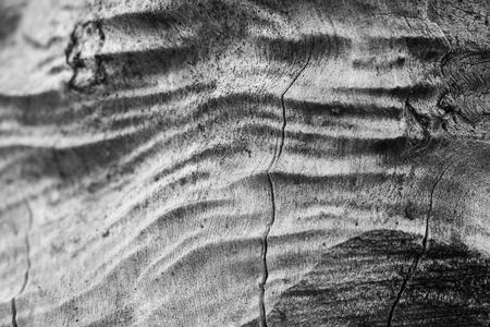 Old tree trunk with old wrinkled wood 版權商用圖片