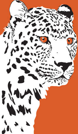 Black and white vector portrait of a wild leopard on  orange