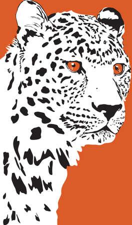 Black and white vector portrait of a wild leopard on  orange