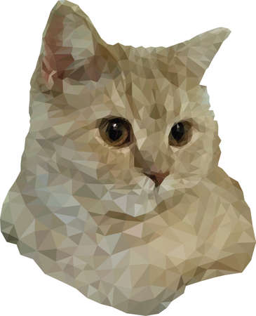 Scottish cream cat. Colorful vector illustration of a cat s head. Triangulated realistic portrait of a cute peach cat. Cute fluffy pet. A beautiful animal. Image for design, postcards. Stock illustration.