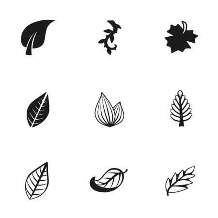 sycamore: Vector leaf icon set on white background
