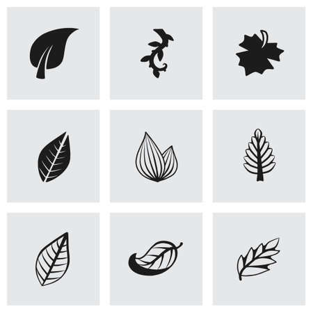 sycamore: Vector leaf icon set on grey background