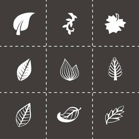 sycamore: Vector leaf icon set on black background