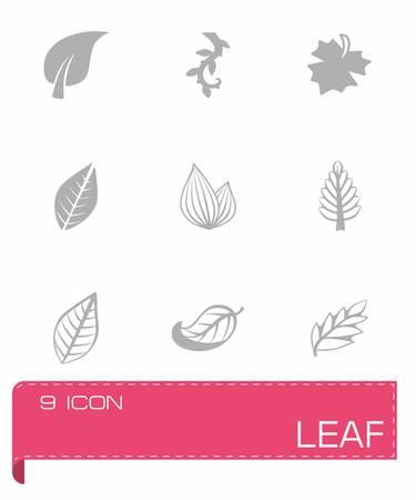 white feather: Vector icono de hoja fija sobre fondo gris