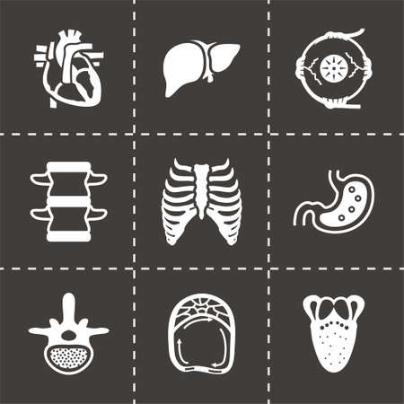 rectum: Vector Anatomy icon set on black background