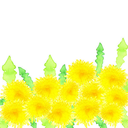 bright yellow blooming watercolor dandelions border with space for text and green leaves