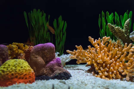 aquarium decorated with water grass and colorful corals