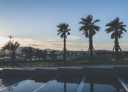 Beautiful scenery of sunset over parking lot and palm trees at Jeju island
