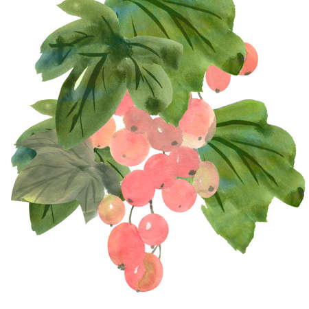 colorful illustration of branch of pink grapes isolated on white background