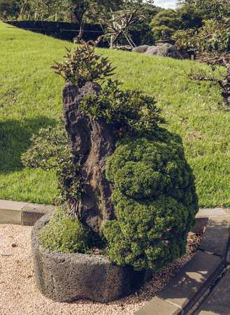 Jeju Island, South Korea, september 05, 2019: beautiful bonsai with different species growing together
