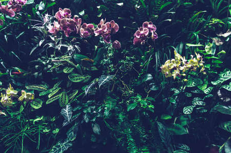 lush foliage of plants of vertical garden with blooming orchids