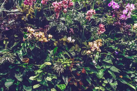 vertical garden wall with colorful blooming orchids, spathiphyllums and other tropical plants