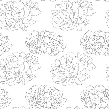 Pion flower vector texture illustration