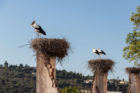 Storks in the Algarve Banque d'images