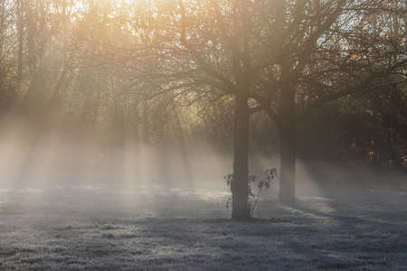 Park in the morning with fog and ground frost