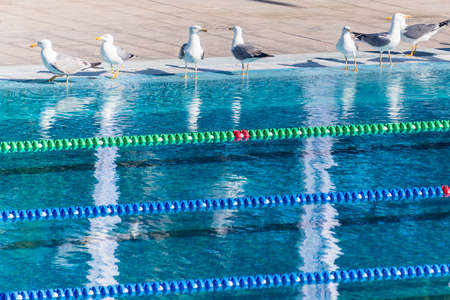Empty  swimming pool occupied by seagulls. Sense of calm, freedom and impending competition. Stock Photo