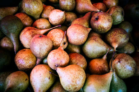 Fresh organic pears. Pear autumn harvest. Fruit background. Juicy flavorful pears of rustic background. Autumn nature and abundance concept