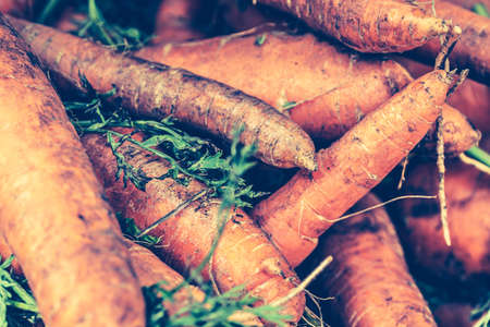 Fresh Harvested Carrots on a market stall. Natural, healthy, organic vegetables. Local produce at the autumn farmers market in the city. Rustic Style. Country Village Agriculture concepts. 写真素材