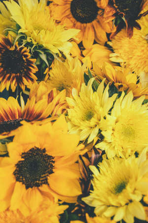 Sunflowers and chrysanthemusms close up. Bright yellow sunflowers. Sunflower, chrysanthemum background. Yellow color signifies vitality and intelligence. Symbol of happiness. Selective focus 写真素材