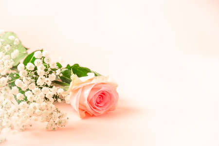 GYPSOPHILA AND ROSE FLOWER ON THE CORNER OF THE PINK BACKGROUND.