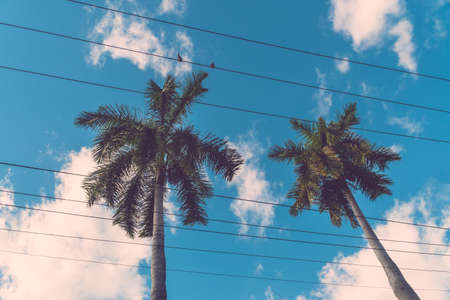 Palm coconut trees on blue sky background with copy space, vintage style, tropical coast. 写真素材