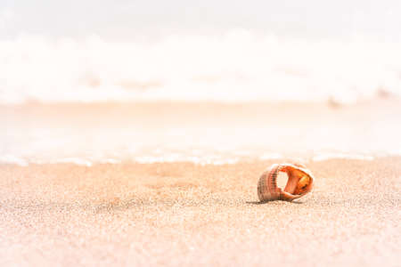 Seashell on beach with waves. Vacation summer background. Selective focus.
