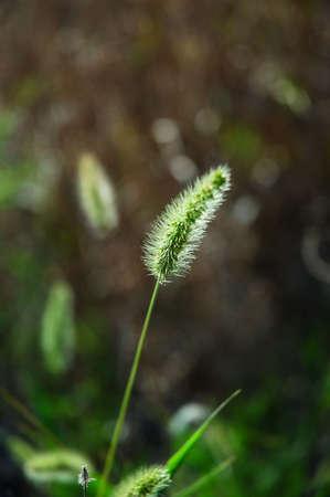 Grass Seedlings Imagens