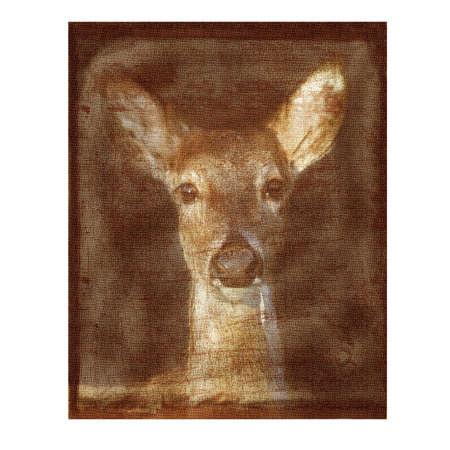 Old paper with Mule Deer head shot.