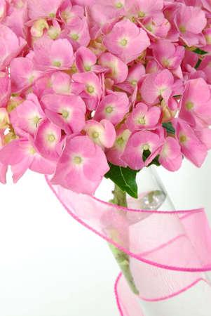 Lacecap Hydrangea (macrophylla  normalis) flower in a  vase.  Stock Photo
