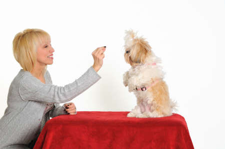 A dog trainer teaching a puppy to sit up for a treat.