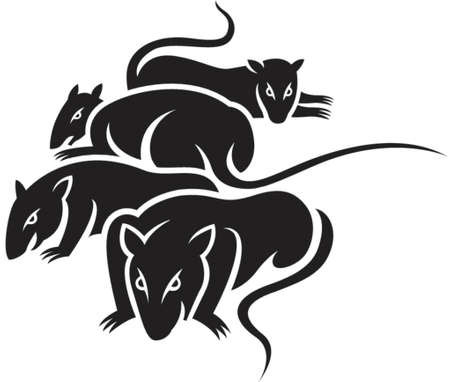rats: Un gruppo di ratti male in bianco e nero i colori solidi