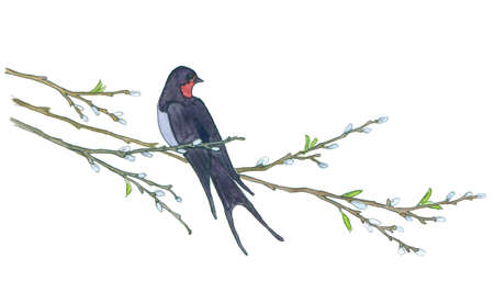 Bird on willow tree. Hand drawn illustrations