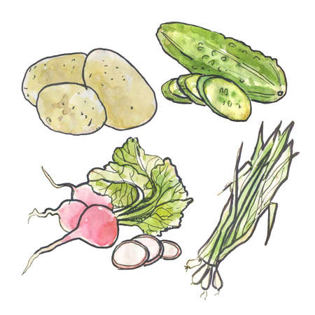 Hand-drawn watercolor food illustrations. Isolated drawings of the fresh vegetables - watercolor set of vegetables. Cucumber, onion, potato and radish