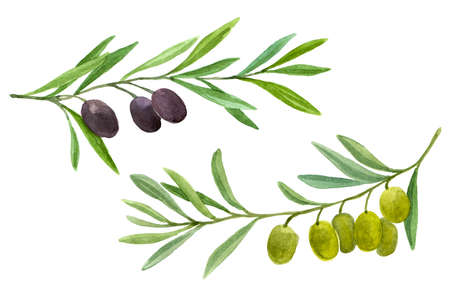Olives set. Olive branch with berries. Watercolor illustration isolated on white background