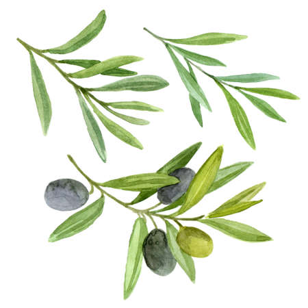 Olive branch set with berries. Mediterranean food. Watercolor illustration  isolated on white background