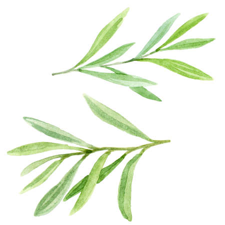 Hand painted set with leaves and branches. Floral illustration isolated on white background