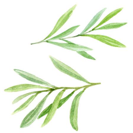 Handgeschilderde set met bladeren en takken. Bloemen illustratie geïsoleerd op een witte achtergrond