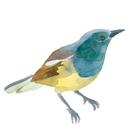 fascinate: A little blue bird, watercolor illustration isolated on white background