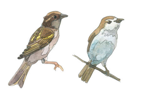 Two little bird. Watercolor sparrow, hand painted illustration Stock Photo