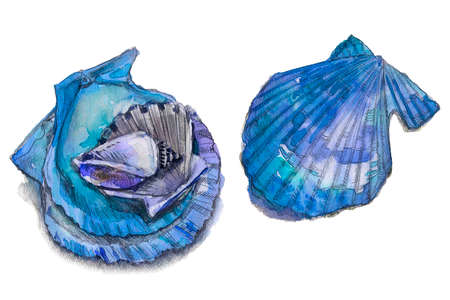 Illustrations of blue sea shells. Hand drawn watercolor painting on white background