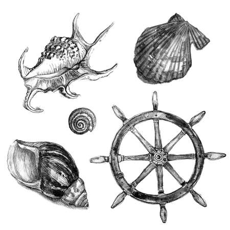 Black and white sketch. Watercolor set. Collection with seashells