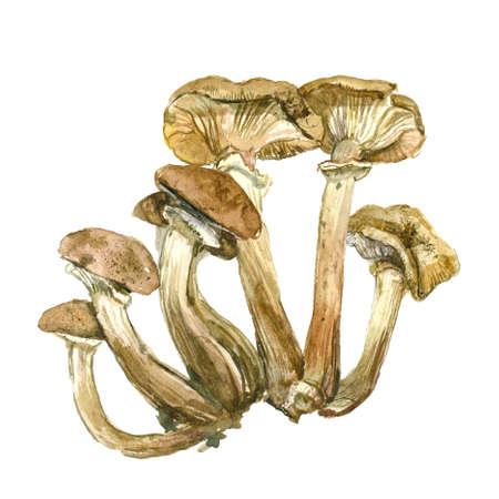 Honey agaric. Set of watercolor yellow mushrooms. Hand drawn nature illustration Stock Photo