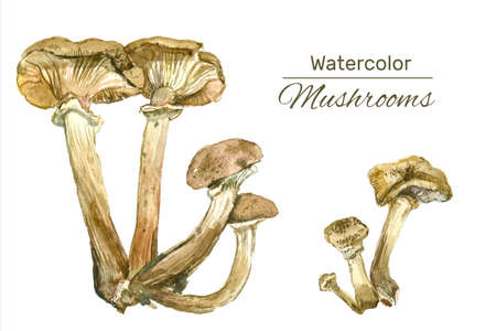 Set of watercolor mushrooms. Hand drawn nature illustration. Autumn print