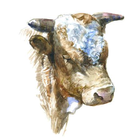 Watercolor cow. Hand drawn watercolor illustration