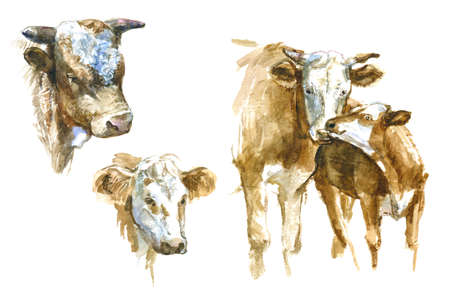 Set of watercolor cow. Momma cow and calf. Cute illustration