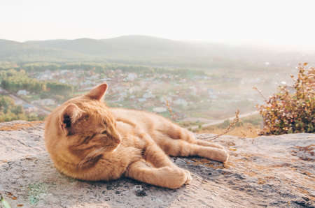 Peaceful red cat sleeping in the countryside. Summer or autumn weekend concept Banco de Imagens
